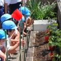 保護中: ミニトマトの苗植え